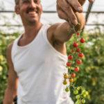 Manfred Urban zeigt stolz seine Cherrytomaten
