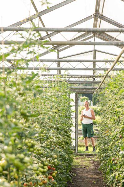 Manfred Urban steht zwischen den Tomatenpflanzen