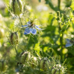 Freilandblumen