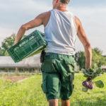 Manfred Urban mit einer Kiste Gemüse unterm Arm