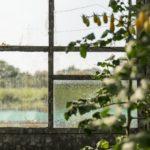Blick nach außen durch die Glasscheiben des Gewächshauses