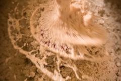 Stimmt der Salzgehalt des Sesams wird er erst einmal geschleudert.
